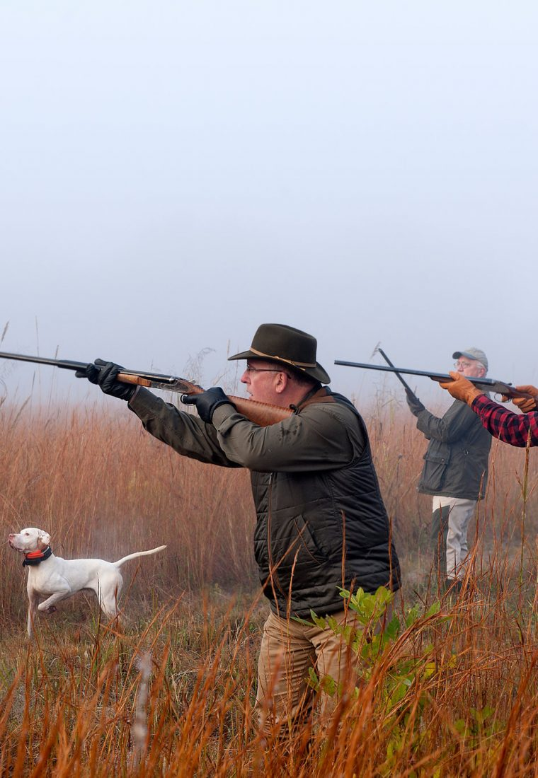 Tips To Help You Prepare Hunting Dogs
