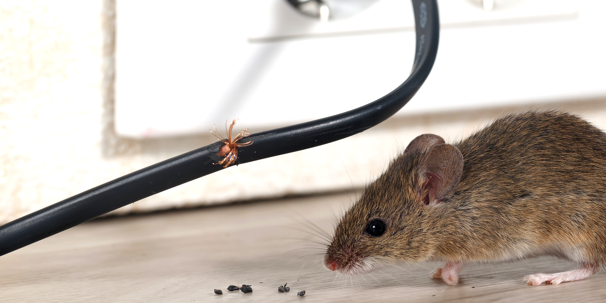 Effective tips to get rid of mice in cabinets